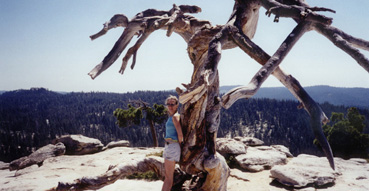 Dead tree at the top of Sentinel Dome.